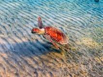 Overzeese schildpad Royalty-vrije Stock Fotografie