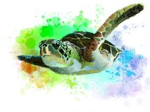 Overzeese schildpad royalty-vrije illustratie
