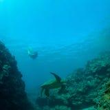 Overzeese schildpad en snorkeler Stock Afbeeldingen