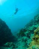 Overzeese schildpad en snorkeler Stock Foto's