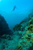 Overzeese schildpad en snorkeler Royalty-vrije Stock Fotografie