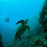Overzeese schildpad en snorkeler Royalty-vrije Stock Foto's