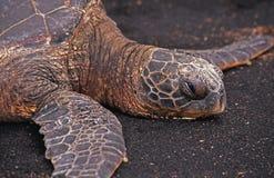Overzeese schildpad op een strand Royalty-vrije Stock Fotografie