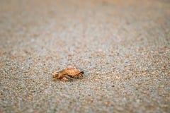 Overzeese schildpad op strand royalty-vrije stock foto's