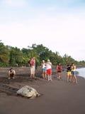 Overzeese schildpad in Tortuguero Nationaal Park, Costa Rica Stock Foto's