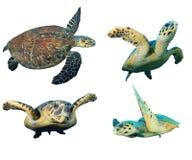 Overzeese Schildpadden op wit Stock Fotografie
