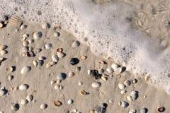Overzeese schuim en shells royalty-vrije stock afbeelding