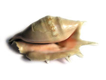Overzeese shell 01 Stock Afbeeldingen