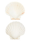 Overzeese shell Stock Afbeeldingen