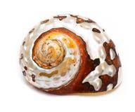 Overzeese shell royalty-vrije stock fotografie