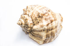 Overzeese shell Stock Fotografie