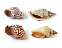 Overzeese shell stock foto