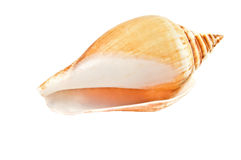 Overzeese shell Royalty-vrije Stock Foto