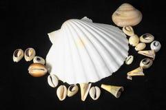 Overzeese shell Stock Fotografie