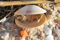 Overzeese shell Stock Afbeelding