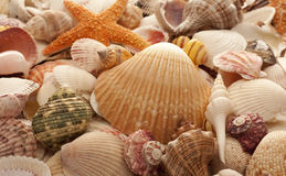 Overzeese Shell Achtergrond Stock Afbeelding