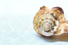 Overzeese shell achtergrond Stock Fotografie