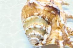 Overzeese shell achtergrond Royalty-vrije Stock Afbeeldingen