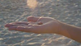 Overzeese shell in de palm van uw hand stock footage