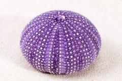 Overzeese shell die van violette zeeëgel op het zand liggen Royalty-vrije Stock Foto's