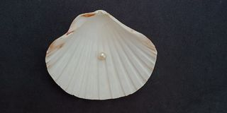 Overzeese shell en parel met zwart geweven behang als achtergrond, royalty-vrije stock foto's