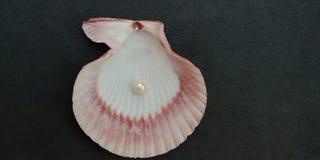 Overzeese shell en parel met zwart geweven behang als achtergrond, royalty-vrije stock afbeelding