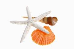 Overzeese shell en zeester Stock Afbeeldingen