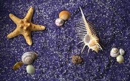 Overzeese shell en zeesterren op lilac zand Stock Afbeeldingen