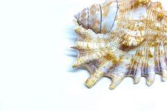 Overzeese shell hoek Royalty-vrije Stock Afbeelding
