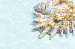 Overzeese shell hoek Stock Afbeeldingen
