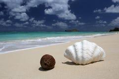 Overzeese shell kokosnoten zandig strand turkoois oceaanhawaï Stock Fotografie