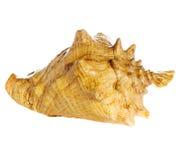 Overzeese shell macro Royalty-vrije Stock Afbeelding