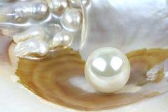 Overzeese shell met echte parels, macroschot Stock Foto