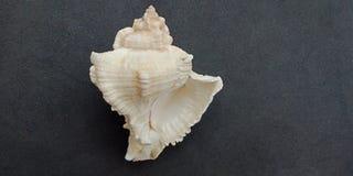 Overzeese shell met zwart geweven behang als achtergrond, stock afbeelding