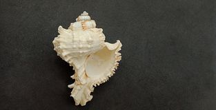 Overzeese shell met zwart geweven behang als achtergrond, stock fotografie
