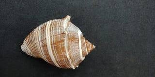 Overzeese shell met zwart geweven behang als achtergrond, stock foto's