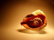 Overzeese shell op Bruine Achtergrond Stock Fotografie