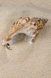 Overzeese shell op de kust Royalty-vrije Stock Afbeeldingen