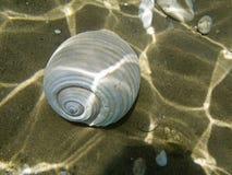 Overzeese shell op de zeebedding Royalty-vrije Stock Foto's