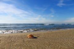 Overzeese shell op een oever in een zonnige dag Stock Afbeelding