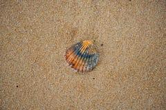 Overzeese shell op een zandig strand stock foto's