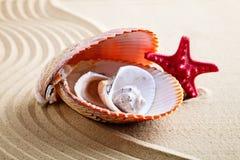 Overzeese shell op het overzeese strand De zomerrust Stock Afbeeldingen
