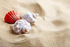 Overzeese shell op het overzeese strand De zomerrust Royalty-vrije Stock Afbeeldingen