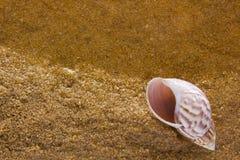 Overzeese shell op het overzeese zand Stock Fotografie
