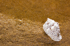 Overzeese shell op het overzeese zand Stock Afbeelding