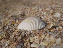 Overzeese shell op het strand royalty-vrije stock foto