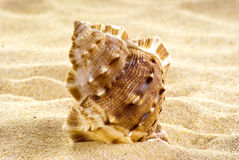 Overzeese shell op het strand Royalty-vrije Stock Fotografie