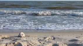 Overzeese shell op het strand onder de golven bij zonsondergang stock video