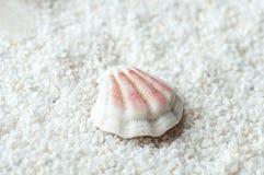 Overzeese shell op het zand Stock Fotografie