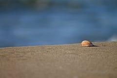 Overzeese shell op het zand Stock Afbeelding